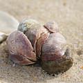 Pile-up On The Beach by Neil Taitel