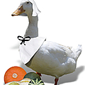 Pilgrim Duck by Gravityx9 Designs
