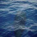 Pilot Whale 8  by Jouko Lehto
