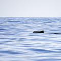 Pilot Whales 2 by Jouko Lehto