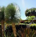 Pinball Plants, Long-pin Plants by Sofia Metal Queen