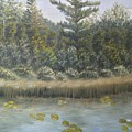 Pine And Lily Pads 2  by J O Huppler