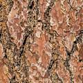 Pine Bark by Marv Vandehey