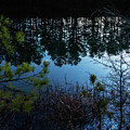 Pine Barren Reflections by Louis Dallara