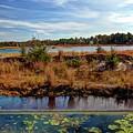 Pine Barrens Bog In New Jersey by Geraldine Scull
