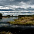 Pine Barrens by Louis Dallara