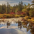 Pine Barrens New Jersey Whitesbog Nj by Geraldine Scull