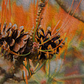 Pine Cone 2 by Melvin Busch