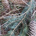 Pine Cone Brush by Lisa Cassinari