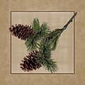 Pine Cone Design by Wildlife Fine Art