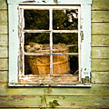Pine Cones In The Window by Maggie Terlecki