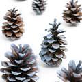 Pine Cones Looking Like Christmas Trees On White Snowy Backgroun by Reimar Gaertner