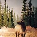 Pine Meadow Elk by JoAnne Corpany