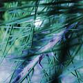 Pine by Milena Boteva