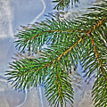 Pine Needles In The Rain by Richard Risely
