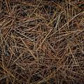 Pine Needles On Forest Floor by Elena Elisseeva