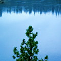 Pine On The River by Ben Upham III