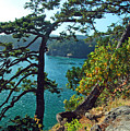 Pine Over The Bay by George E Richards