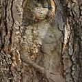 Pine Tree Nymph by Richard Henne