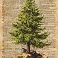Pine Tree,cedar Tree,forest,nature Dictionary Art,christmas Tree by Anna W