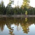 Pine Trees Across Mississippi River by Kent Lorentzen