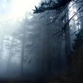Pine Trees In Fog by Austin Howlett