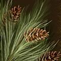 Pine by Veronica Minozzi