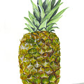 Pineapple by Darice Machel McGuire
