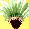 Pineapple Flower by Filipa Mendes