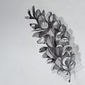 Pinecone by Nicole Curreri
