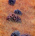 Pinecone Pile by Patrick Witz