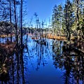 Pinelands by Paul Kercher