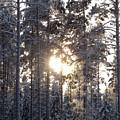 Pines 2 by Jouko Lehto