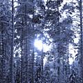 Pines 4 by Jouko Lehto