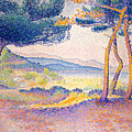Pines Along The Shore, 1896 by Henri Edmond Cross