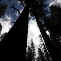 Pines by Chris Brewington Photography LLC