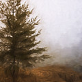 Pines In The Mist by Evie Carrier