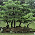Pines On Island In The Gardens by Tim Laman