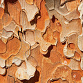 Pining For A Jig-saw Puzzle by Marilyn Cornwell