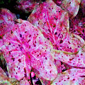 Pink Caladium by Diane DiMarco