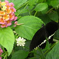 Pink And Black In The Garden by Brian Hoover