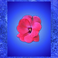 Pink And Blue by Bob Welch
