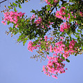Pink And Blue Canopy by Lucyna A M Green