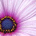 Pink And Blue by Fraser Davidson