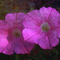 Pink And Gold 6156 Dp_2 by Steven Ward