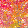 Pink And Orange Autumn by Wendy Yee