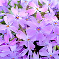 Pink And Purple Spring by Wendy Yee