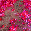 Pink And Red Firecracker Debris Abstract by Bonnie Follett