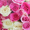 Pink And White Roses Bunch by Anastasy Yarmolovich