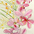 Pink And Yellow Orchids by Andriane Georgiou
